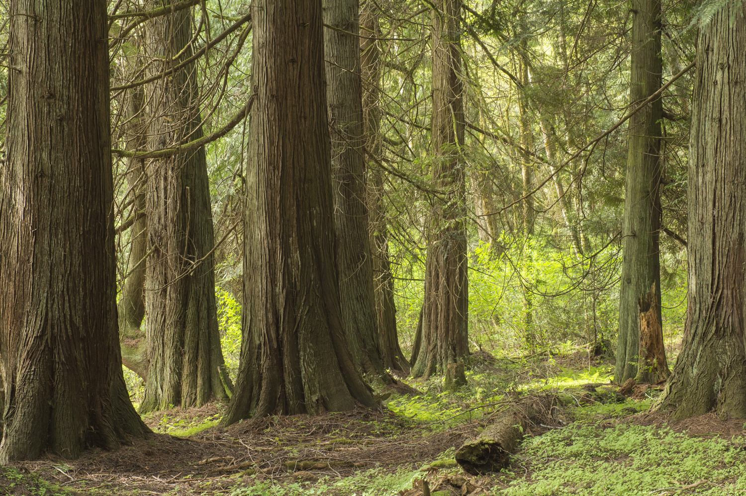 Our forest showing off some over one-hundred year old trees.