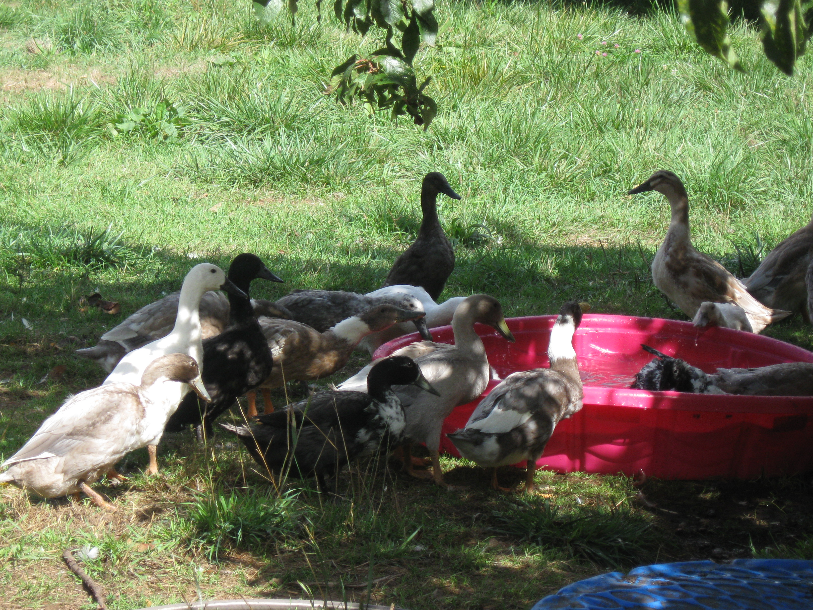 Ducks at WAter